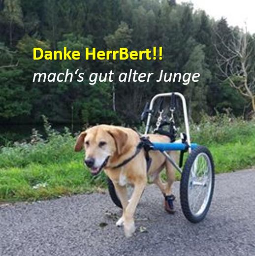 Sandra Mierke Spendet Herrberts Rolli Für Einen Bedürftigen Hund